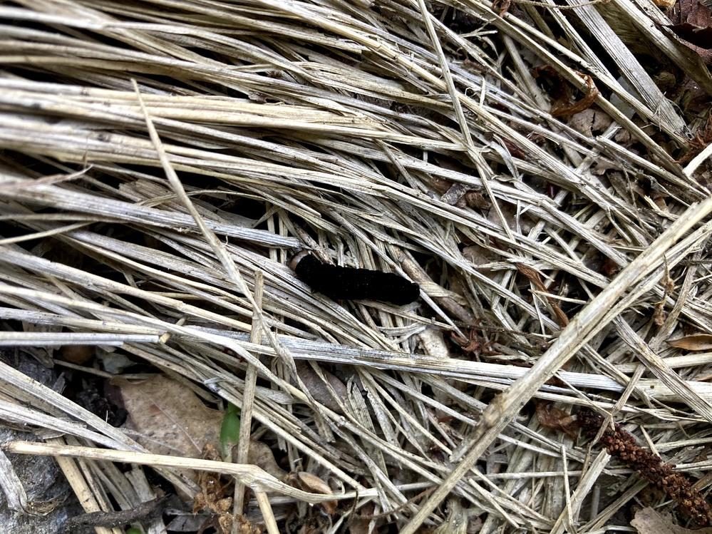 イモムシの名前を教えてください。兵庫県宝塚市の草むらで見つけました。