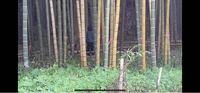 心霊現象について質問です。 https://youtu.be/JVlGIQlOsIs  この動画の5分2秒のところで女の子?が竹の中でずっと立っていて、???と思いました。  これって心霊ですか?わかる方よろしくお願いします。