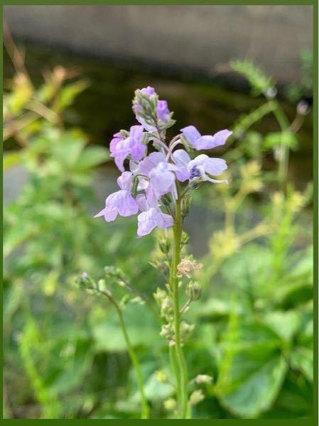 知人が撮った写真なのですが、これは何という名前の花でしょうか?