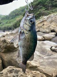 この魚はなんですか??