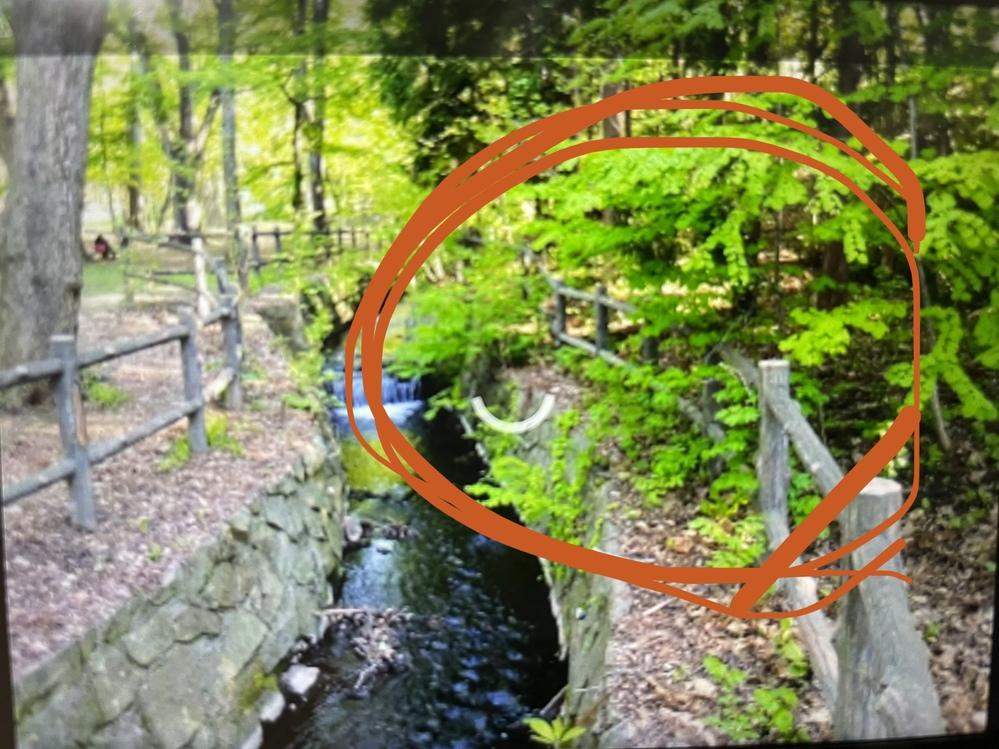 画像のクオリティが低すぎて申し訳ないのですが 丸で囲んでいる植物が何かわかりますか?