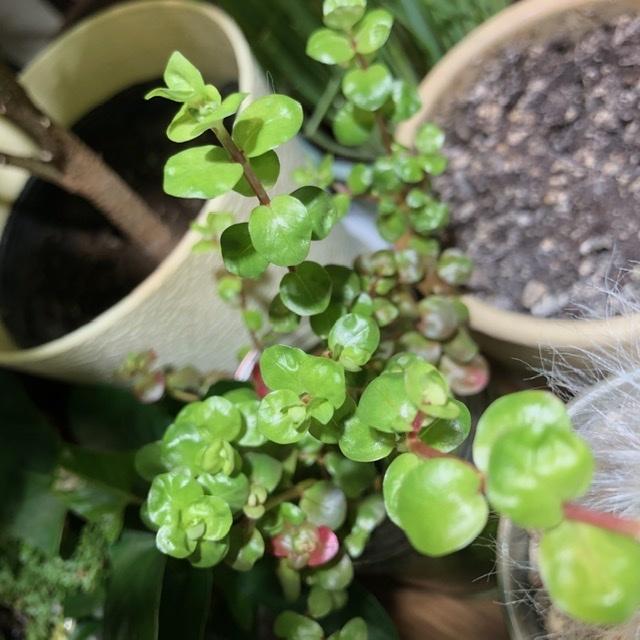 侘び草に入ってたんですけどこの植物の名前わかりますか? あと水中でco2なしでも育つでしょうか?