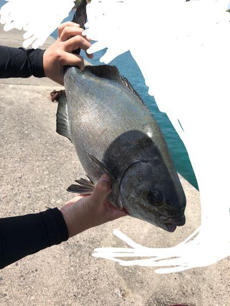 この魚は何という魚か教えてください