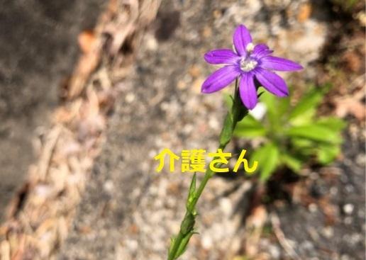 この花の名前は何ですか? 撮影日時は2021年5月11日、撮影場所は兵庫県です。 よろしくお願いします。
