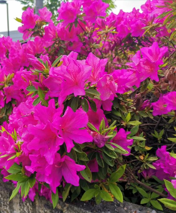 先日撮った花ですが、花に詳しくないのでこの花の名前を教えてください。