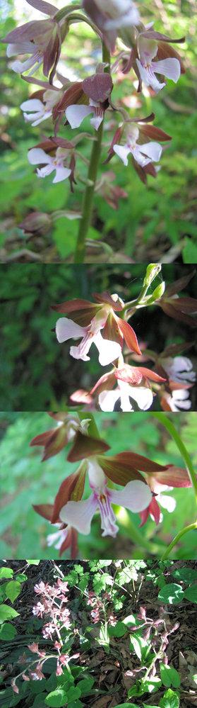 新型コロナウイルス蔓延という事で、結構 皆さん山(登山)や草原(キャンプ)など山野に行っているそうですが、 僕もカメラ片手に行ってみました。 画像 ↓ はそこ(山)で撮った写真です。 半日蔭にあった、高さ10cm~15cmくらい?の草花です。 何という名前の植物でしょうか??