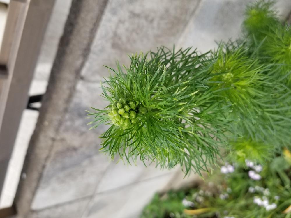この葉はなんという名前の葉っぱですか?