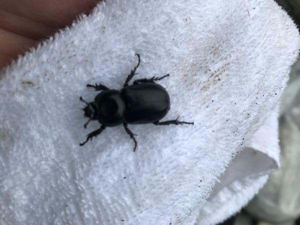 この虫の名前わかる方いらっしゃいましたら、教えて下さい。小さなツノもあります。