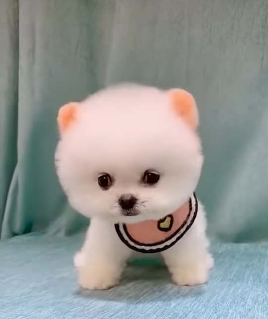 この犬の犬種はなんですか?