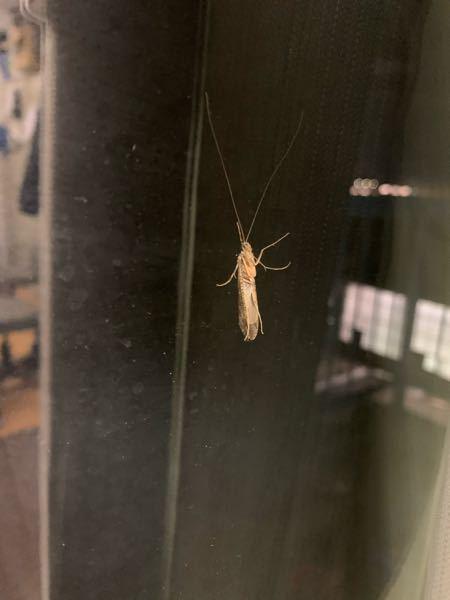 これはなんという虫ですか? わかる方いたら教えてください!