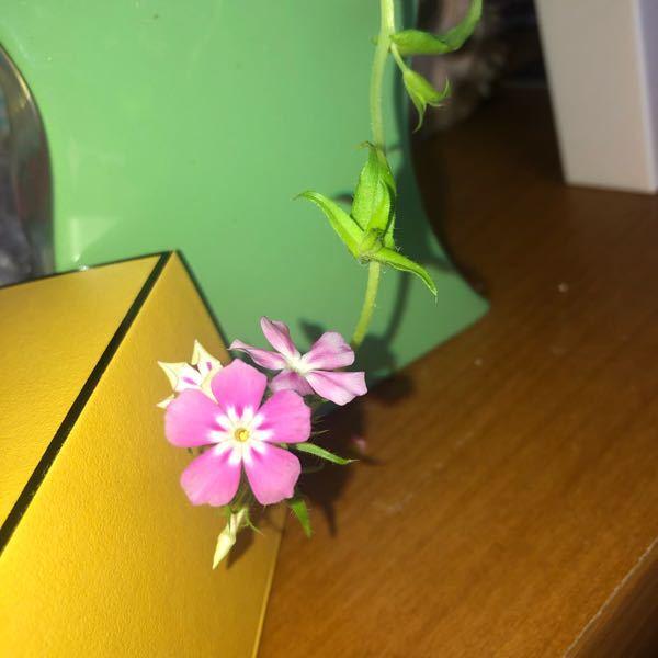 この画像のお花の名前が分かる方いらっしゃいますか?