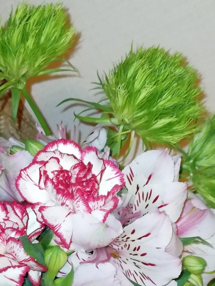 どなたかこのみどりの花の名前を教えてくださいませ。 母の日のプレゼントでもらいました。
