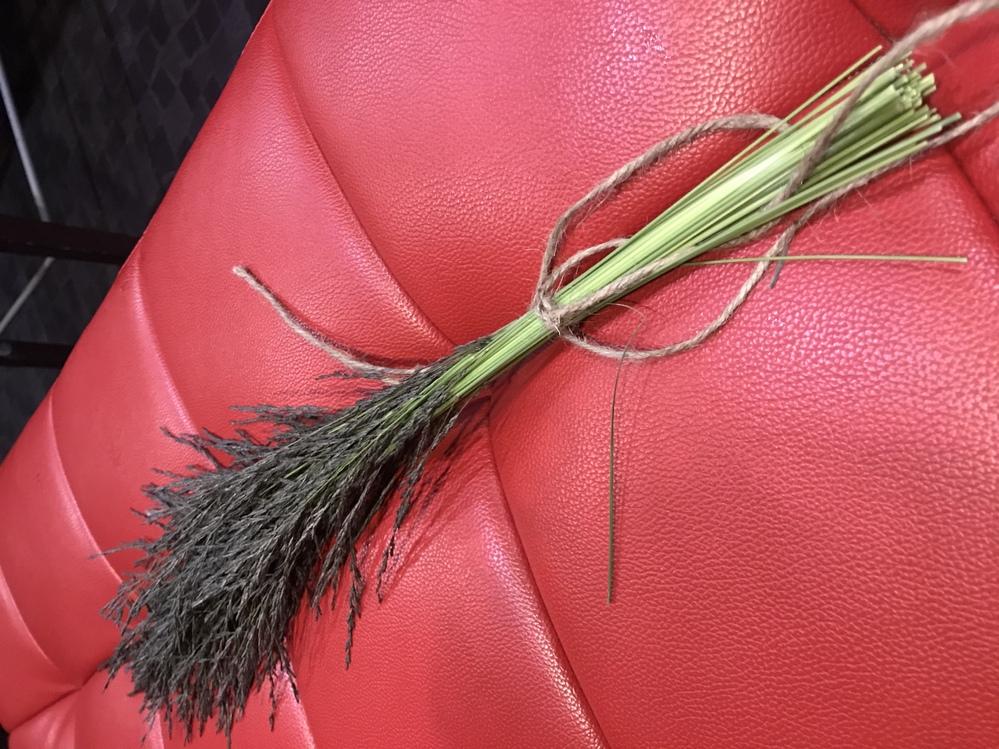 この植物の名前を教えてほしいです… 今日5/13大阪の大和川に生えていました。 黒い色のイネ科の植物なのか、枯れかけでこの色なのかもわかりません。 わかる方いらっしゃったらよろしくお願いいたします。