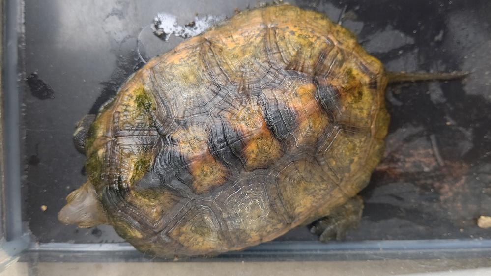 この亀は何の種類ですか?