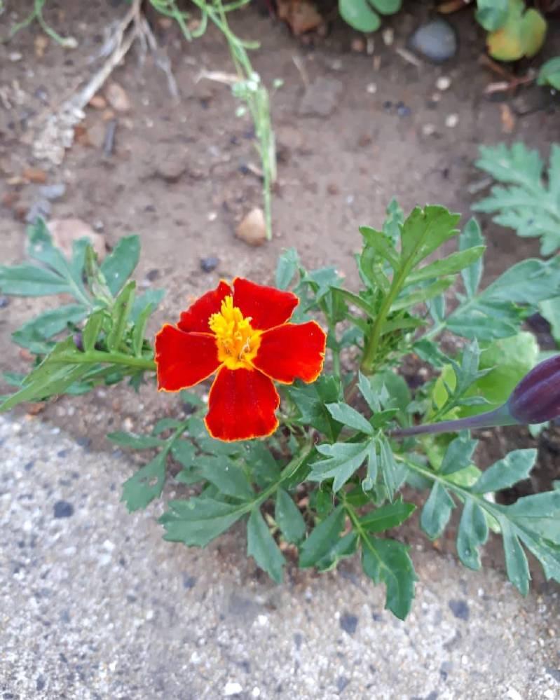 花の名前を教えて下さい
