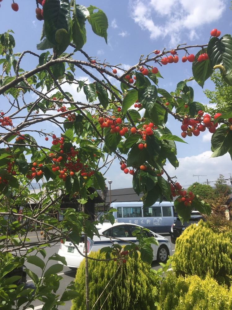 この木の実は食べれるのでしょうか?
