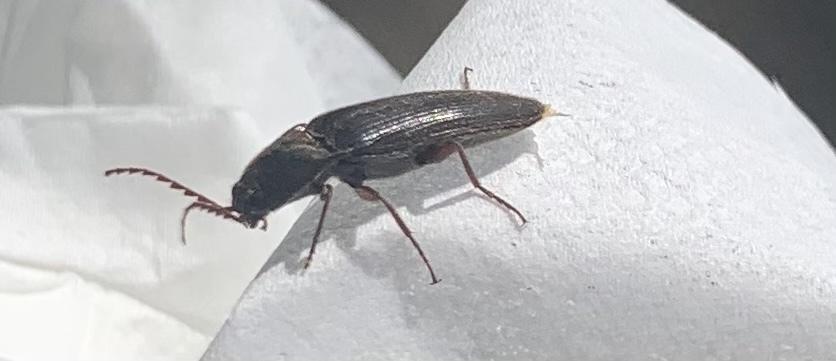 これはなんの虫かわかりますか??