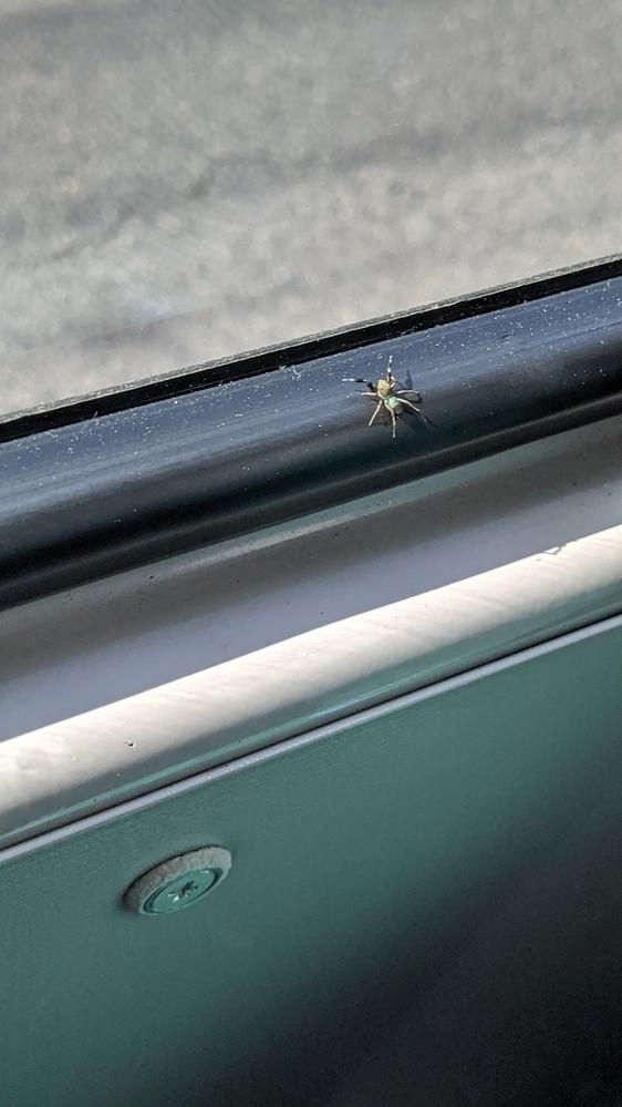 この蜘蛛はなんという名前ですか?