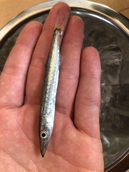 何の魚でしょうか? 海で釣れました
