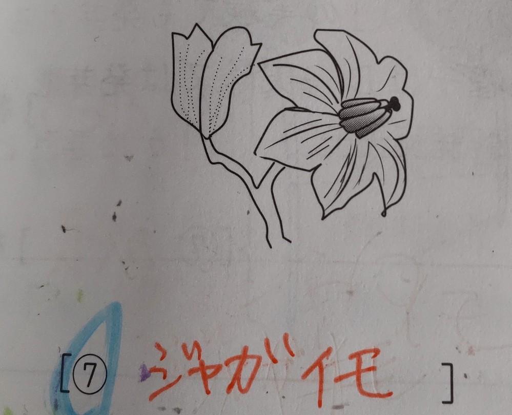 中学受験 理解 の質問です。 画像の花の植物の名前を答えなさいという問題で、ジャガイモが正解なのですが、ナスにも見えてしまうのですがナスではなくジャガイモであるポイントがあれば教えて下さい。 ※これ以外にヒントなどはありませんでした。