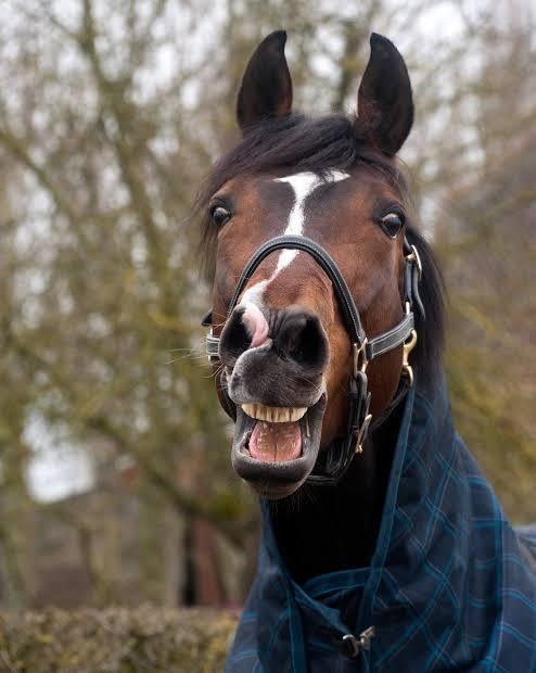 ヴィクトリアマイル 福永騎乗 リアアメリアは もう終わった馬で洋梨でしょうか?