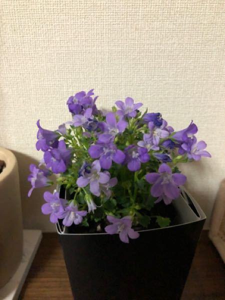 これは何という花ですか? 教えてください
