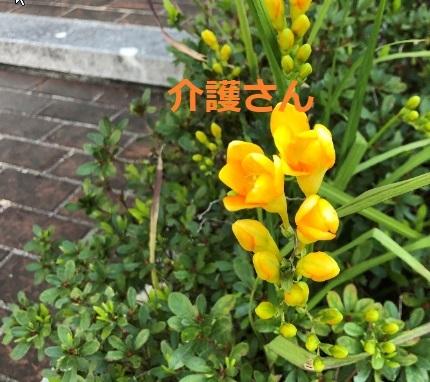 この花の名前は何ですか? 撮影場所は兵庫県で、撮影日時は2021年4月8日です。 よろしくお願いします。