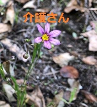この花の名前は何ですか? 撮影場所は兵庫県で、撮影日時は2021年5月12日です。 よろしくお願いします。