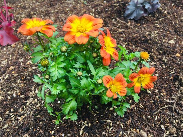この花の名前がわかる方いませんか?!