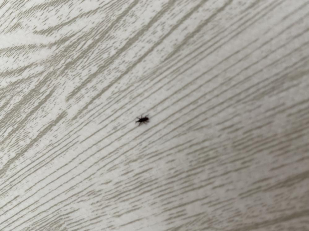 最近家の中で黒い小さい虫がでます。ゴキブリではなさそうですがどなたかわかりますか? 検索したらヒラタキクイムシ?っぽいですけど、あと駆除はバルサンとかでも効きますか?