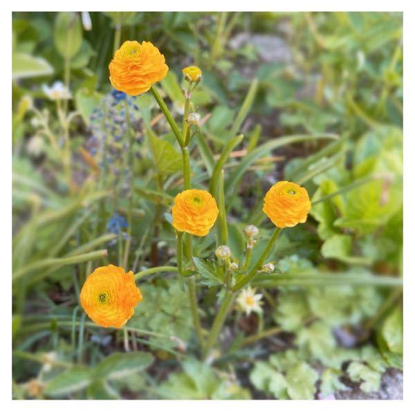 これがなんのお花かわかる有識者の方いれば是非教えて下さい…!!
