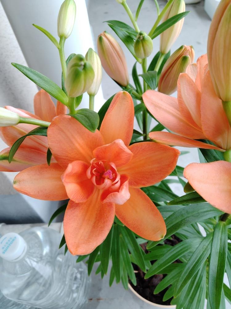 何の花かわかりますか? よろしくお願いいたします