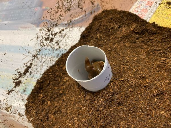 人工蛹室これで大丈夫でしょうか? 一昨日自分で蛹室を作ったオスが2匹羽化してきたんですけど羽が折れたり羽パカで可哀想でした この子だけでも上手く羽化して欲しくてトイレットペーパーでやる方法を見つけたした。土に埋める形です ツノの先がちょうどトイレットペーパーの芯から出ないぐらいの高さです