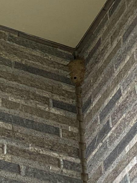 これはドロバチの巣ですか? オオスズメバチとかの初期段階ではないと良いのですが… 普通のトックリ型より大きめだったので不安で質問いたしました。