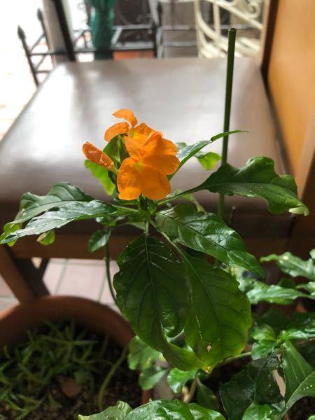 この花の名前、ご存知の方いらっしゃいますか?