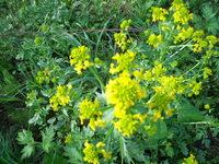黄色い花の名前を教えて下さい。 よろしくお願いいたします。