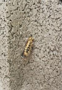 これはなんですか? ブロックについており、少しクモの糸のようなものが見えます。 何かの害虫でしょうか?