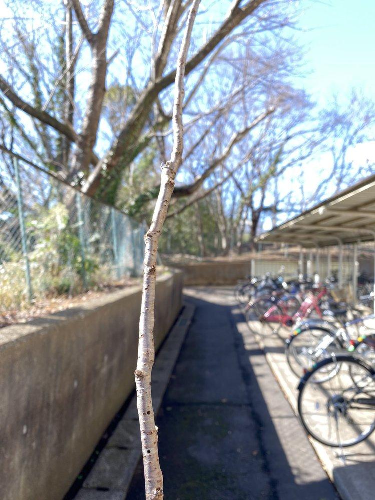 この写真は千葉県内の高校なのですがどこの高校か分かる方おられますか?