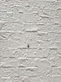 この虫はゴキブリの赤ちゃんですか?