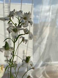 少し枯れ気味ですが、この花の名前と、花の中心にある長く伸びているもの?はなんでしょうか?? 色は水色でした