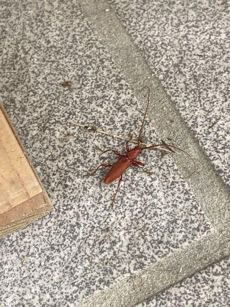 この虫はなんと言う名前の虫でしょうか? 家の中にいました。