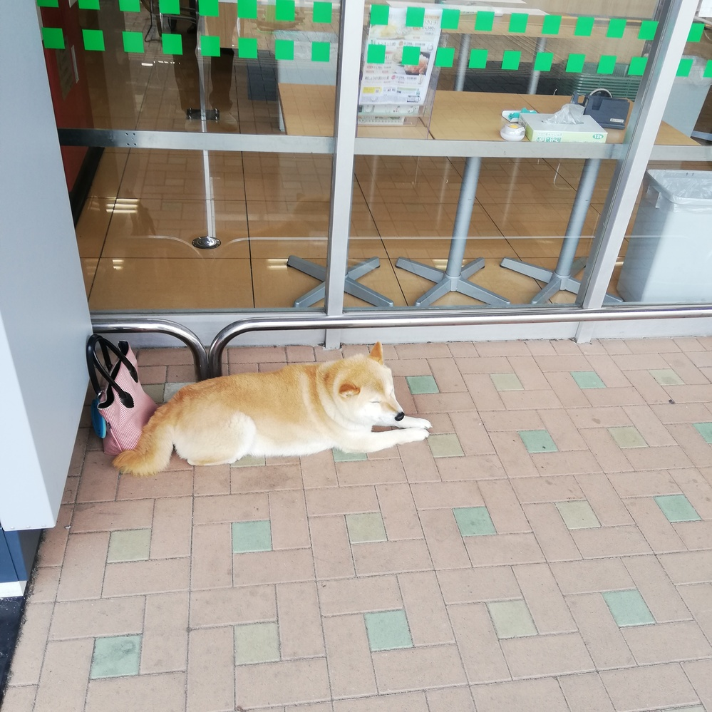 このワンちゃん 何犬ですか? 体重も知りたいです 宜しくお願い致します。