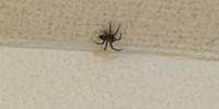 少し画質が荒くて申し訳ないですが、この蜘蛛の名前がわかる方いらっしゃいますか? もしかしたら…というのでも大丈夫です。