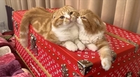 ヒカキンさんが飼ってる猫ちゃんはなんであんなに太っちゃったんですか?