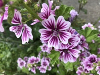 これは何という花ですか?雑草でしょうか?道に生えていたのですが、とても綺麗だったので、、