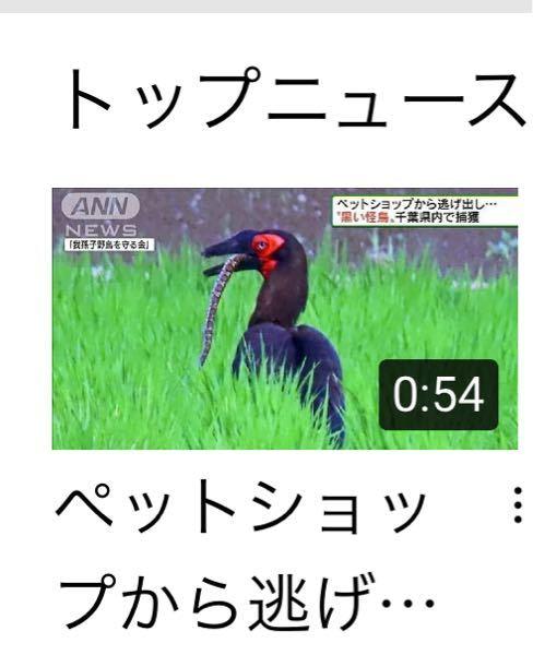 この鳥、マムシを食べるんですか? 毒があるのに、大丈夫?