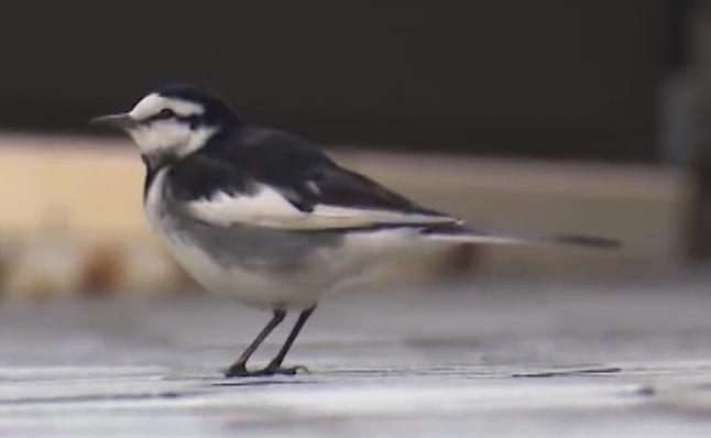 この鳥は何という鳥ですか?