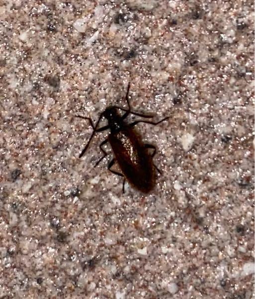 何という昆虫ですか? ハムシの仲間?