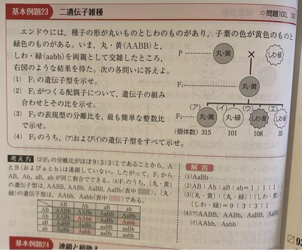 生物の遺伝子の問題です。 (1)の遺伝子型を表す時、例えば、丸・黄(AABB)が、丸・黄(AaBb)の場合って有りますか?