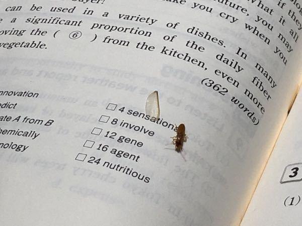 昨日から家に出てきた虫についてです。 毎年出てくる虫で毎年悩んでいるんですが、うちではそれを「羽虫」と呼んでいます。 ①この虫を家に入れない、または自分の周りに近付けさせないために出来ること、するべきことはなんでしょうか? ②この虫には4枚の羽があるようですが、あまりにも取れやすすぎると思います。なんでこんなにもろいんでしょうか? ①虫コナーズ的なものだったり虫除けスプレー等でも対策できるのかなと思って質問させて頂きました。効果的なものを教えて頂きたいです。 ②私が机の上でその虫を見つけた時には既に羽が1枚取れていたのですが、虫が苦手な私は手を付けず、スマホを触りながらチラチラ見ていました。そしたら、見る度に羽が取れていってて、最終的には全ての羽が抜け落ちてしまっていました。全くこっちは触ってないのに勝手に動いて勝手に羽が取れていくなんてこんなにもろくて大丈夫なのだろうかと思うほどでした。大丈夫なのですか? 詳しい方何とかくみ取って回答して頂けると助かります。よろしくお願いします!